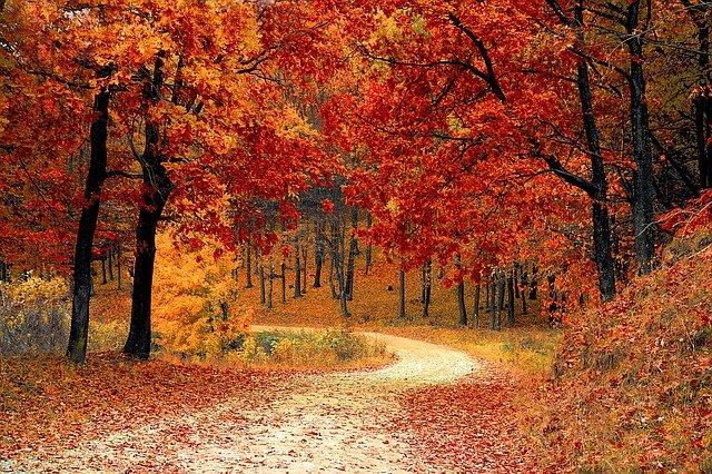 souffleur feuilles
